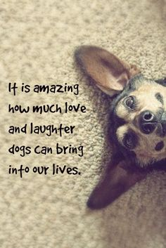 It is amazing how much love and laughter dogs can bring into our lives.
