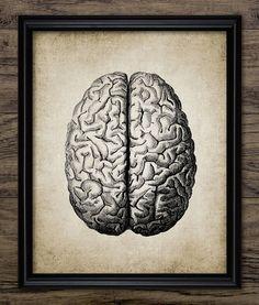 Brain Print Human Anatomy Vintage Human Brain by InstantGraphics