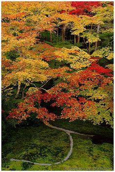 Autumn colours over moss garden, Ruriko-in temple 瑠璃光院, Kyoto, Japan | Flickr: partage de photos!