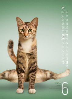 Cats that do pics. Kittens Cutest, Cats And Kittens, Cat Entertainment, Animal Yoga, Cute Friends, Do Exercise, Domestic Cat, Nature Animals, Cute Baby Animals