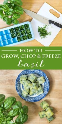 Basil: How to Grow, Chop & Freeze | Tips for growing and harvesting basil. Includes how to chiffonade basil for cooking and preserving. #Sponsored