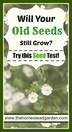 Will Your Old Seeds Still Grow Try this Seed Test!