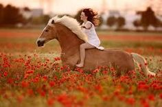 Portfolio – Alexandra Evang Photography Portfolio – Alexandra Evang Photography - Art Of Equitation Horse Girl Photography, Equine Photography, Animal Photography, Photography Portfolio, Cheval Haflinger, Haflinger Horse, Cute Horses, Horse Love, Beautiful Horses