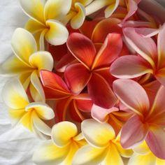 flowers for rahel.  by *omnia*