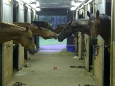 """Ha, ha! What happens when Jessica Springsteen's dad's song """"Let's Be Friends"""" starts rocking the barn."""