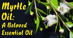 Did you know that myrtle oil can be used to treat respiratory and skin problems? Discover more by checking out this article on the benefits of myrtle oil. http://articles.mercola.com/herbal-oils/myrtle-oil.aspx