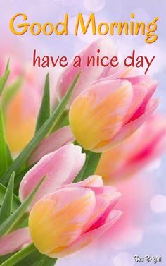Tuesday Quotes Good Morning, Happy Morning Quotes, Cute Good Morning Quotes, Good Morning Picture, Good Morning Flowers, Good Morning Messages, Good Morning Good Night, Morning Pictures, Good Morning Images