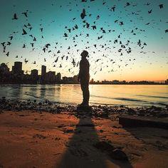 -Birdman-  This is Adam @afonography commander of birds.  #Lightroom  #looksee by gavman18