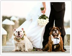 Bulldog Weddings « BaggyBulldogs Still trying to talk the future daughter-in-law into this.