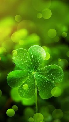 41 Ideas For Spring Wallpaper Iphone Backgrounds St Patrick Iphone Wallpaper Herbst, Frühling Wallpaper, Spring Wallpaper, Wallpaper For Your Phone, Green Wallpaper, Trendy Wallpaper, Flower Wallpaper, Autumn Leaves Background, Leaf Background