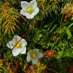 Camminando nel bosco!  #flowers #natura #bosco #trentino #montagna #trekking #Falchetto #falchettolovers #falchettoactive #camminarefabene #trekking