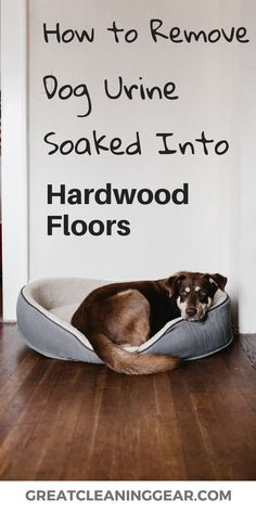 flooring cleaner Dog urine soaked into hardwood floor can cause serious damage to your flooring. This guide will explore some of the key steps to when cleaning dog urine soaked into the hardwood floor. Dog Pee Smell, Dog Smells, Urine Smells, Cleaning Dog Pee, Cleaning Tips, Cleaning Products, Cleaning Supplies, Cleaning Solutions, Urine Stains