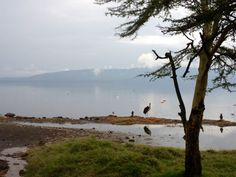 Nakuru, National park. Kenya. Photograph - (c) copyright of Bow & Diamond, 2012.