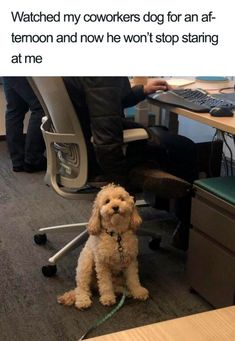 46 Funny Dogs To Brighten Up Your Day - Funny Dog Quotes - 46 Funny Dogs To Brighten Up Your Day The post 46 Funny Dogs To Brighten Up Your Day appeared first on Gag Dad. Funny Animal Memes, Dog Memes, Funny Animal Pictures, Funny Dogs, Funny Puppies, Dog Humor, Hilarious Pictures, Videos Funny, Cute Little Animals