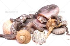 Realistic Graphic DOWNLOAD (.ai, .psd) :: http://jquery-css.de/pinterest-itmid-1006681381i.html ... octopus ...  animal, baby, background, cooked, down, food, fresh, healthy, image, isolated, macro, meat, natural, nature, ocean, octopus, raw, sea, seafood, shells, side, single, studio, two, up, water, white, whole  ... Realistic Photo Graphic Print Obejct Business Web Elements Illustration Design Templates ... DOWNLOAD :: http://jquery-css.de/pinterest-itmid-1006681381i.html