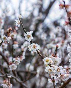 いいね!2,898件、コメント177件 ― Mai Yanagisawaさん(@toile_blanche)のInstagramアカウント: 「Weekend 🙌🙌 〆 まだまだ寒いですが、楽しい週末をお過ごしください。」