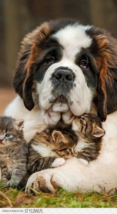 cats and dogs can also fit well together!