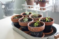 Easy Indoor Herb Garden | Neverland Nook