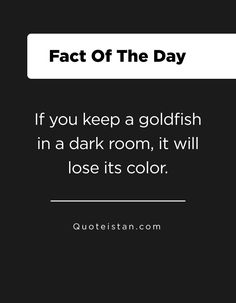 If you keep a goldfish in a dark room, it will lose its color. Fact Of The Day, Quote Of The Day, Life Quotes, Funny Quotes, True Facts, Good Thoughts, Goldfish, Life Lessons, Reflection