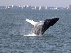 Sea Adventures ~ Virginia Aquarium & Marine Science Center Join our experienced naturalists aboard theAtlantic Explorerfor a ~2 1/2-hour boat tour to search for the whales, dolphins, seals, and seabirds that visit Virginia's coastal waters in winter.