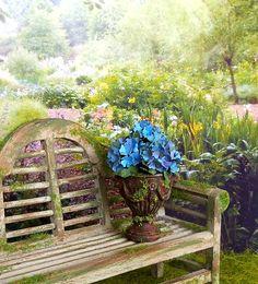 Fleur miniature Hortensias bleu et mauve miniature dans pot