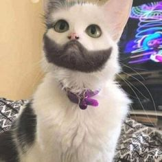 Cat with amazing beard - your daily dose of funny cats - cute kittens - pet memes - pets in clothes - kitty breeds - sweet animal pictures - perfect photos for cat moms Cute Cats And Kittens, I Love Cats, Crazy Cats, Cool Cats, Kittens Cutest, Ragdoll Kittens, Bengal Cats, Cute Funny Animals, Funny Animal Pictures