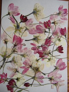 Pressed flowers; showing that each bloom might potentially have a longer life than you imagined.