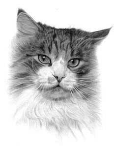 INCREDIBLE pencil drawing of cat! #cat