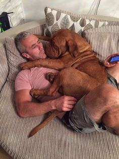 I love you daddy! Dogue de bordeaux puppy cuddles
