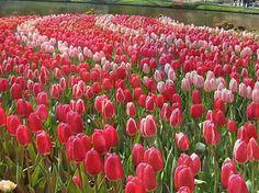 Hd صور طبيعة مناظر طبيعية جميلة خلفيات شاشه موبايل جوال كيوت ايفون تلفون كمبيوتر Red Peppercorn Plants