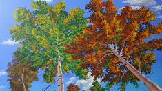 Paint Trees Complete Painting Lesson 4k Ultra-high Definition Birch Fall