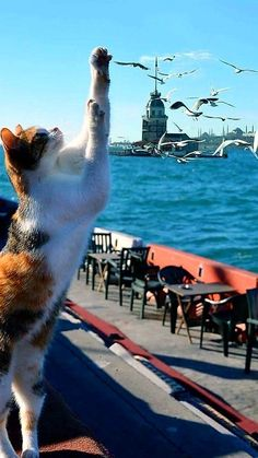 This is my city. Owners are cats and dogs☺ - Nilgun Akay - - This is my city. Owners are cats and dogs☺ - Nilgun Akay I Love Cats, Crazy Cats, Cute Cats, Funny Cats, Istanbul City, Cat City, City Wallpaper, Cool Cafe, Cat Photography
