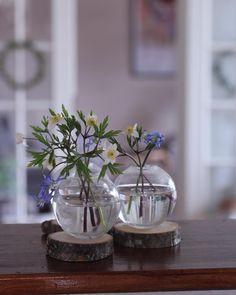 Halusin vappupöytään valkovuokkoja mutta satoi niin paljon etten viitsinyt lähteä omaa pihaa kauemmaksi enkä raaskinut sieltä poimia kuin muutaman kukan. Storiesissa kompostitilanne . #valkovuokko #kukkia #kukka #piha #puutarha #flowers #garden #blumen #garten #trädgård #blommor #have #hage #jardin #fleurs #花 #flowersofinstagram #flowerlovers #instaflowers #viherpihahelmi #mygarden #omapiha #Blomster #all_gardens