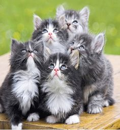 Super cute kitties