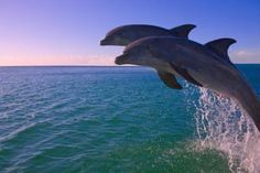 Swim with Dolphins. I have this planned for my 60th birthday! I went up in a hot air balloon for my 50th, so why not?