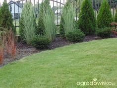 Ogródkowe rewolucje - strona 2 - Forum ogrodnicze - Ogrodowisko