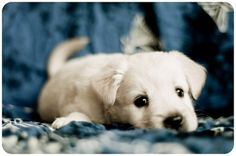 """Because sometimes you have to just say """"yes"""" to a photo of an adorable puppy."""