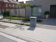 aménagement petit jardin, graminées ornementales et hortensia grimpant