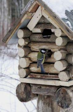 Bird House Feeder, Bird Feeder, Bird House Kits, Bird Boxes, Kit Homes, Yard Art, Bird Feathers, Beautiful Birds, Wood Crafts