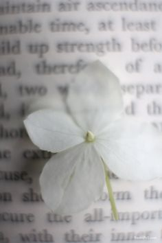 flower on book by sania pell