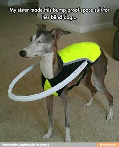 Bump proof space suit for a blind dog