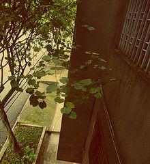 Terrace Terrace, Explore, Plants, Photography, Balcony, Photograph, Patio, Fotografie, Photoshoot
