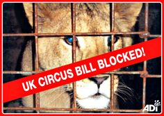 Private Members Bill to Stop Animal Suffering in England's Circuses BLOCKED AGAIN By MP Christopher Chope! ACT NOW