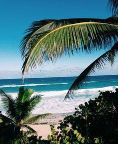 Palms   Beach Views