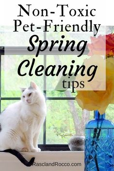 Non-toxic pet friendly cleaning tips for healthy pets and healthy home Cat Care Tips, Dog Care, Pet Tips, Cat Owner Humor, Pet Insurance Reviews, Dog Safety, Safety Tips, Healthy Pets, Pet Safe