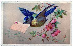 sweet blue bird art | Vintage Clip Art - Bluebird with Cherry Blossoms - The Graphics Fairy