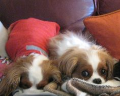 So cute when cavaliers are together!