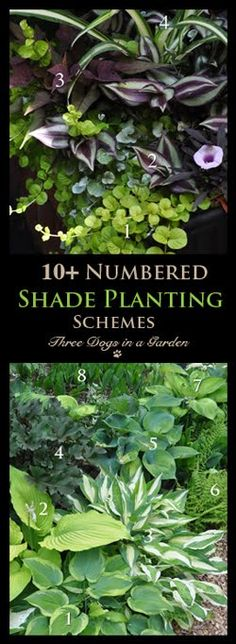 Three Dogs in a Garden: 10+ Numbered and Identified Shade Planting Schemes