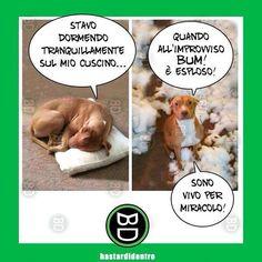 Scuse da #cane #bastardidentro #cuscino #ipnoticamentebastardidentro www.bastardidentro.it
