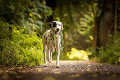 Nachhaltig. Natürlich. Handgefertigt. Pawsome ist unsere kleine Manufaktur in Wien. Wir haben uns auf die Fertigung von individuellem Hundezubehör spezialisiert und fertigen hochwertiges, nachhaltiges Zubehör für deinen Hund! | nachhaltiges Hundezubehör | Hundehalsband | Hundeleinen | Hundezubehör Giraffe, Animals, Pictures, Dog Accessories, Sustainability, Interesting Facts, Linen Fabric, Round Round, Handmade